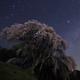 桜の丘の星語り