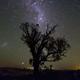 星紡樹 V