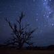 星紡樹 I